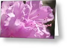 Petal Pink By Jrr Greeting Card