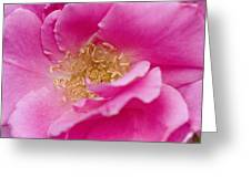 Petal Pink Greeting Card