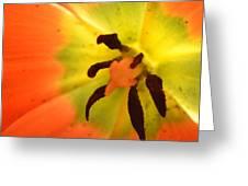 Petal Ray Greeting Card