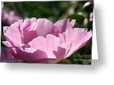 Petal Shadows Greeting Card