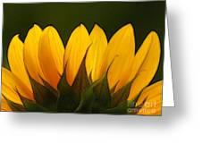Petales De Soleil - A01 Greeting Card