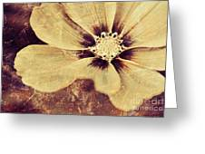 Petaline - T37d03a3 Greeting Card
