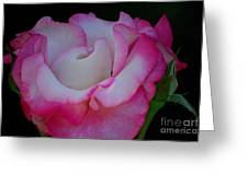 Petals Abstract Greeting Card