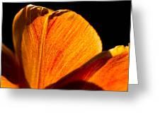 Petals And Sun Greeting Card