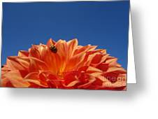 Petals For A Lady Greeting Card
