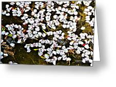 Petals In The Pond Greeting Card