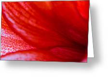 Petals Of A Lily Greeting Card by Kim Lagerhem