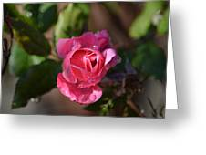 Petals Of Dew Greeting Card