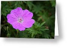 Petals Of Purple Greeting Card