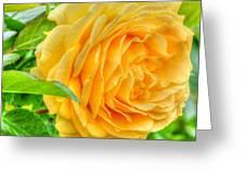 Petals Of Sunshine Greeting Card