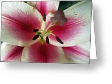 Petals Of Watermelon Greeting Card by Mike Podhorzer