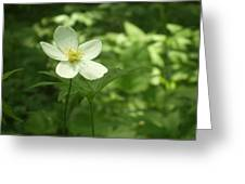 Petals Of White Greeting Card