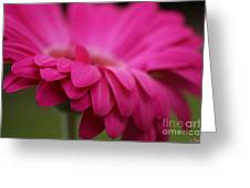 Petals Pink Greeting Card