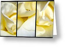 Petals Triptych Greeting Card