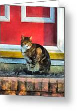 Pets - Tabby Cat By Red Door Greeting Card