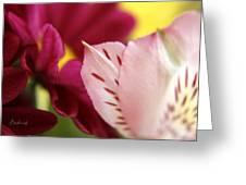 Petuliar Meeting Greeting Card
