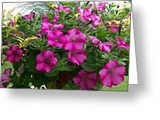 Petunia Basket Greeting Card