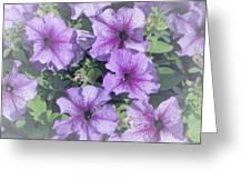 Petunia Patch Greeting Card