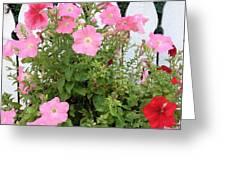 Petunia Picket Fence Greeting Card