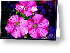 Petunia Rhapsody Greeting Card