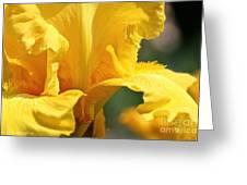 Phaeton's Close Up Greeting Card