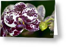 Phal. Brother Redland Spots Greeting Card