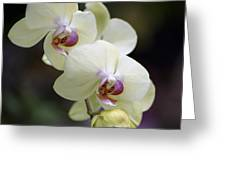 Phal Ming Chao Dancer 0754 Greeting Card