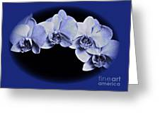 Phalaenopsis 2 Greeting Card