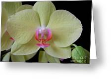 Phalaenopsis Fuller's Sunset Orchid No 2 Greeting Card