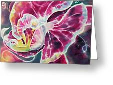 Phalaenopsis I Greeting Card