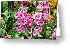 Phalaenopsis Orchids Greeting Card