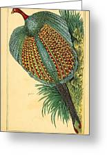 Pheasant 1837 Greeting Card