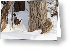 Pheasant Pair Greeting Card