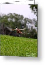 Pheasant Take Off Greeting Card