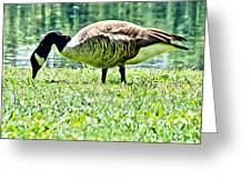 Philly Goose In The Grass Greeting Card