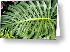 Philodendron 6 Greeting Card