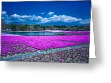 Phlox And Mt. Fuji Greeting Card
