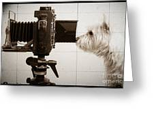 Pho Dog Grapher - Ground Glass View Greeting Card