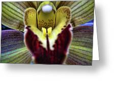 Orchid Center Greeting Card