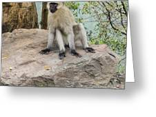 Photogenic Monkey Greeting Card