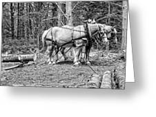 Photograph Of Horses Pulling Logs In Maine Forest Greeting Card