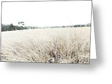 Photographic Sketch Of A Winter Landscape Greeting Card