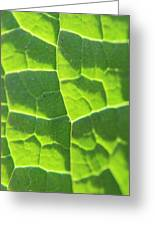 Photosynthesis  Greeting Card