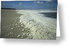 Phytoplankton Bloom On Beach Greeting Card