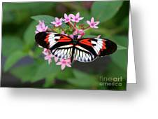 Piano Key Butterfly On Pink Penta Greeting Card