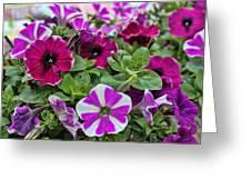 Pick Purple Greeting Card