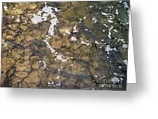 Pickerel Fish Run In Stream Greeting Card