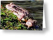 Pickerel Frog Greeting Card
