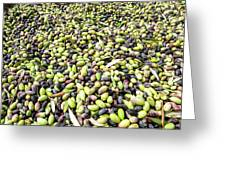 Picking Olives Greeting Card