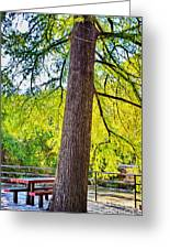 Picnic By The Cypress Greeting Card
